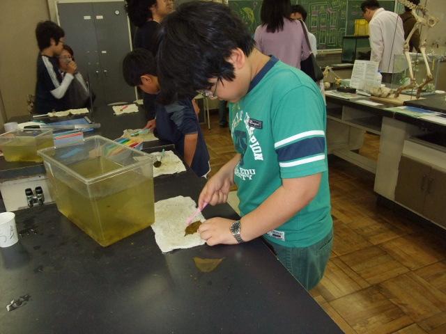 麻布中学・高校文化祭の生物部にて葉脈作りに精を出す下の子